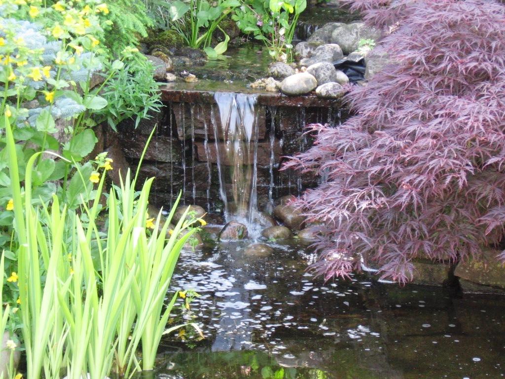natuurlijke tuin (9)